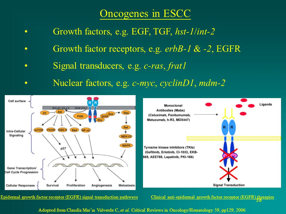 Clinical anti-epidermal growth factor receptor (EGFR) therapies