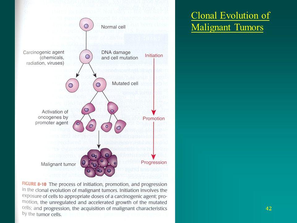 Clonal Evolution of Malignant Tumors
