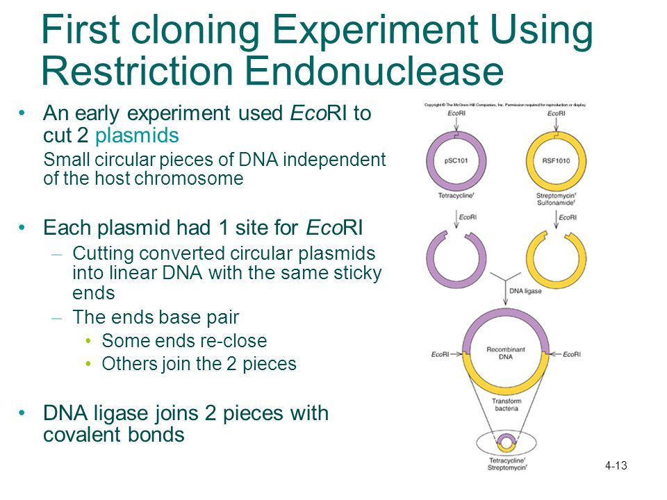 First cloning Experiment Using Restriction Endonuclease