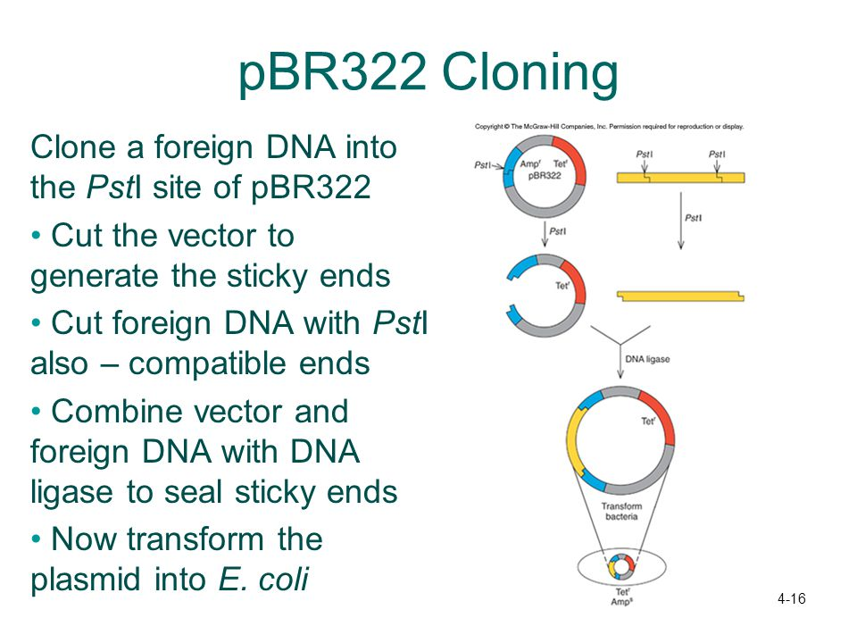 pBR322 Cloning Clone a foreign DNA into the PstI site of pBR322