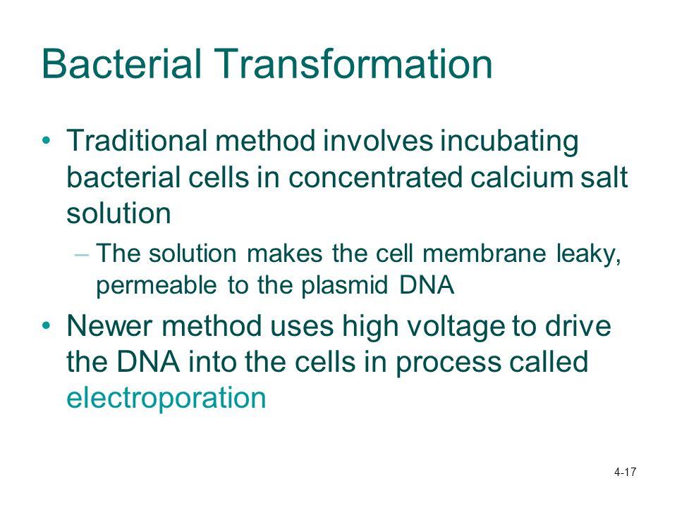 Bacterial Transformation