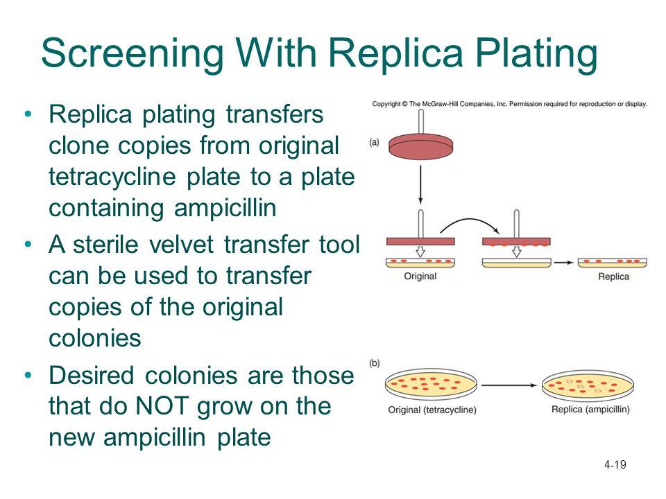 Screening With Replica Plating