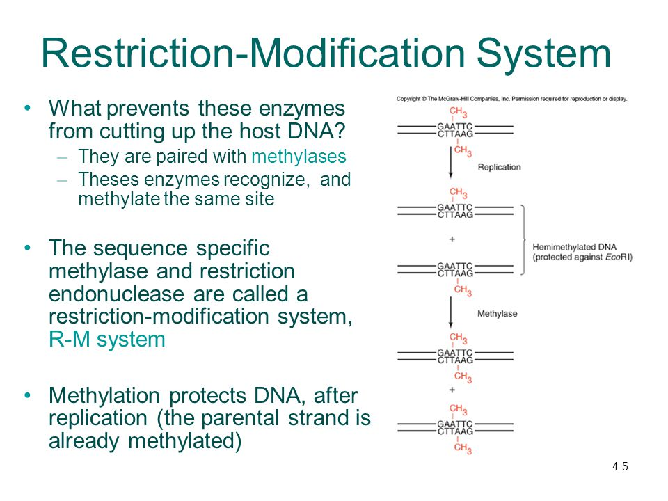 Restriction-Modification System