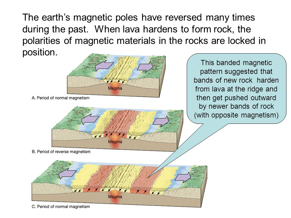 The earth's magnetic poles have reversed many times during the past
