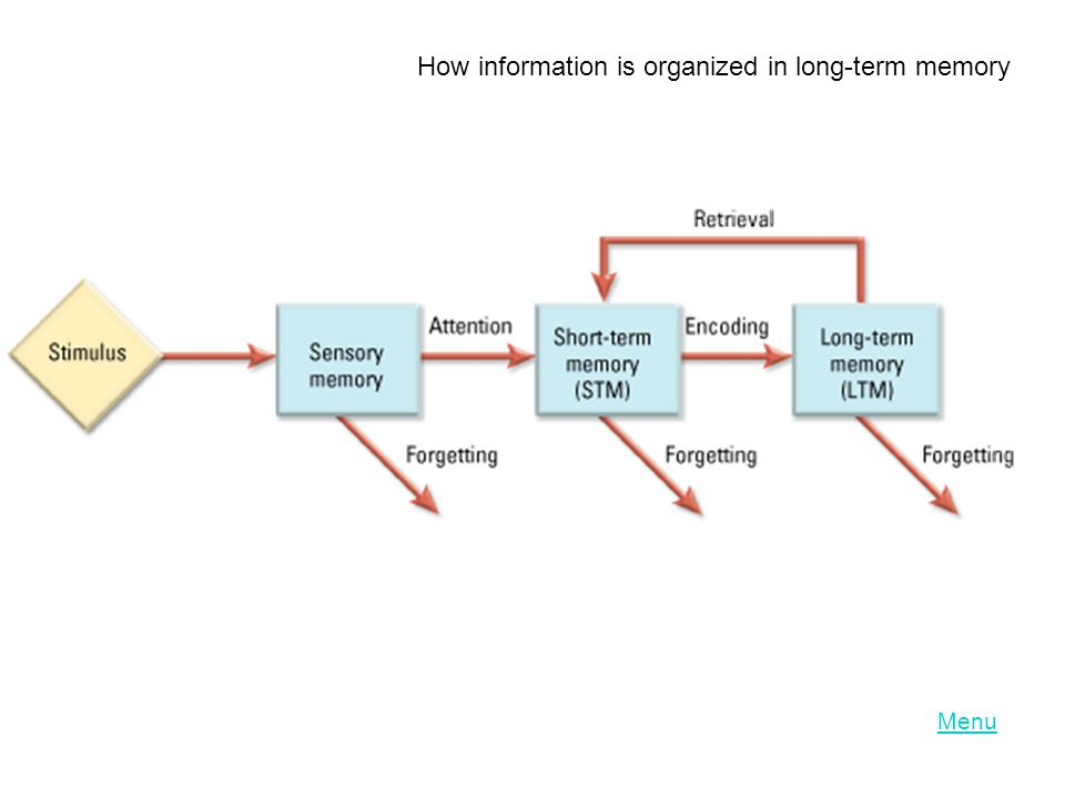 How information is organized in long-term memory