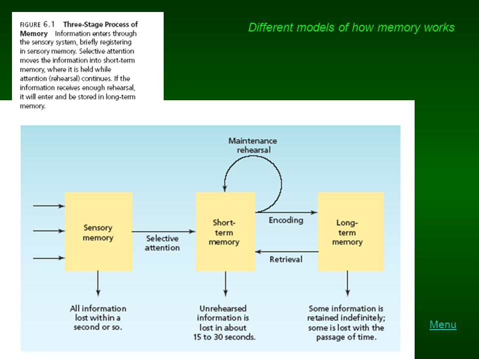 Different models of how memory works