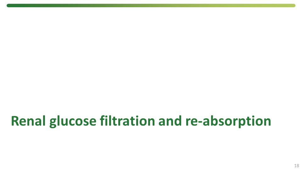 Renal glucose filtration and re-absorption