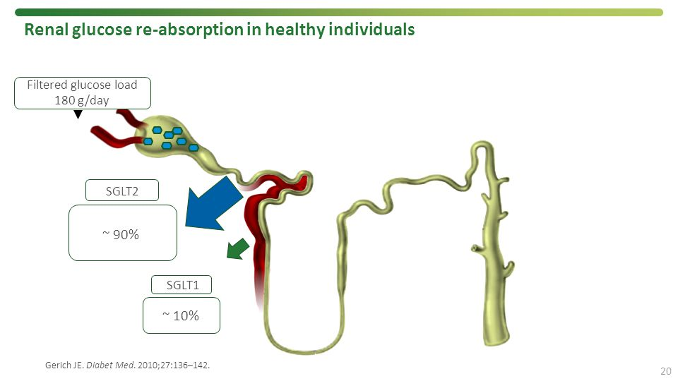 Renal glucose re-absorption in healthy individuals