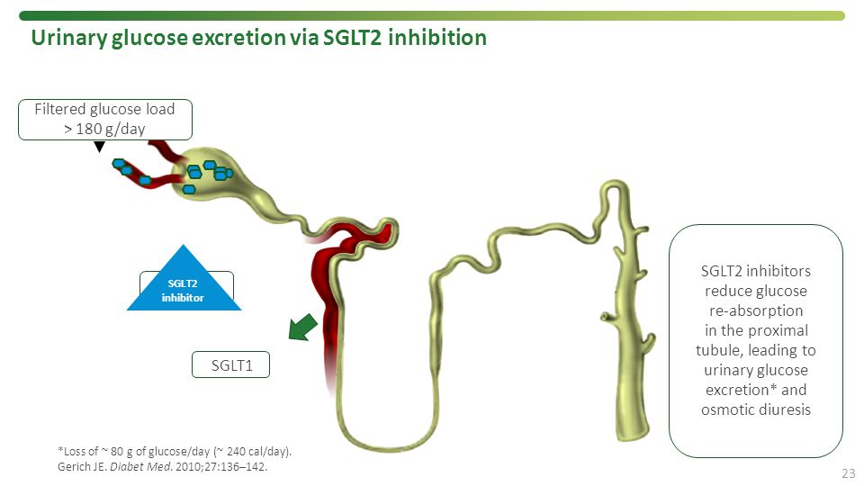 Urinary glucose excretion via SGLT2 inhibition