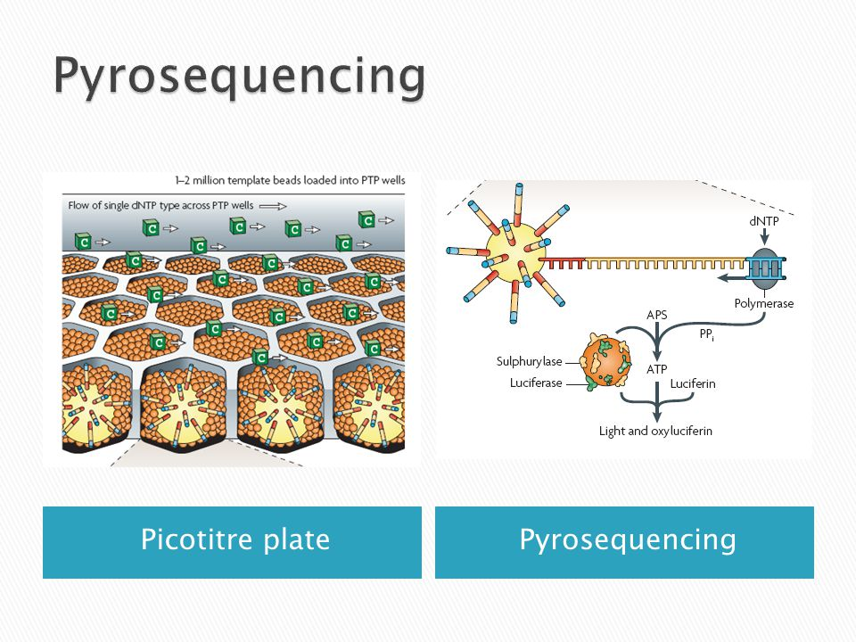 Pyrosequencing Picotitre plate Pyrosequencing
