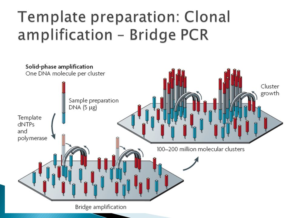 Template preparation: Clonal amplification – Bridge PCR