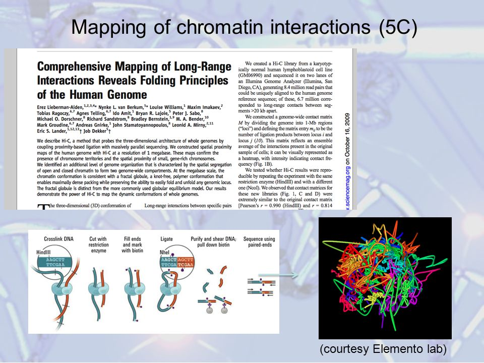 Mapping of chromatin interactions (5C)