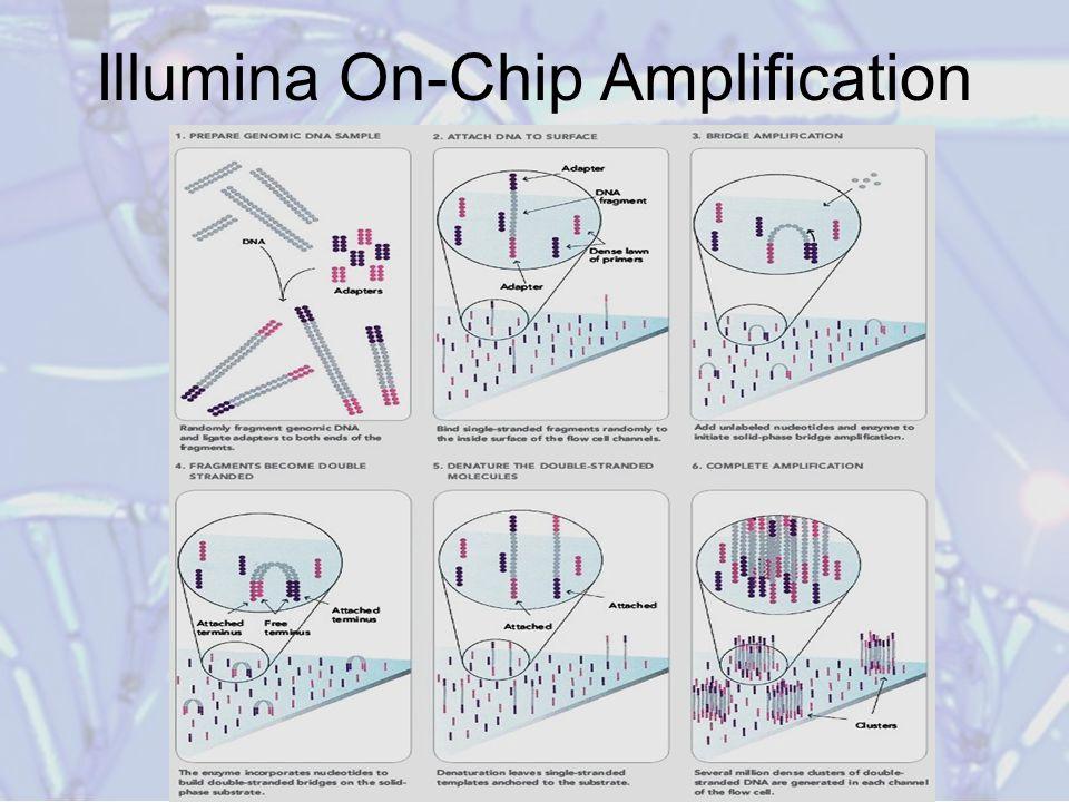 Illumina On-Chip Amplification