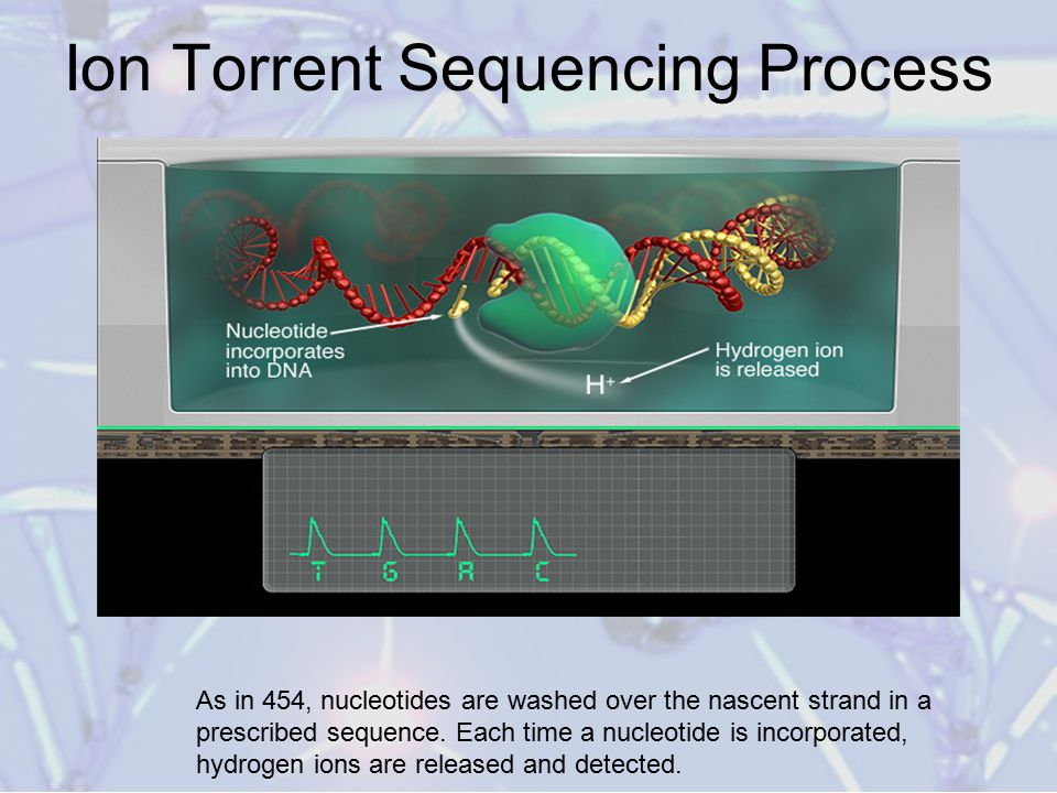 Ion Torrent Sequencing Process