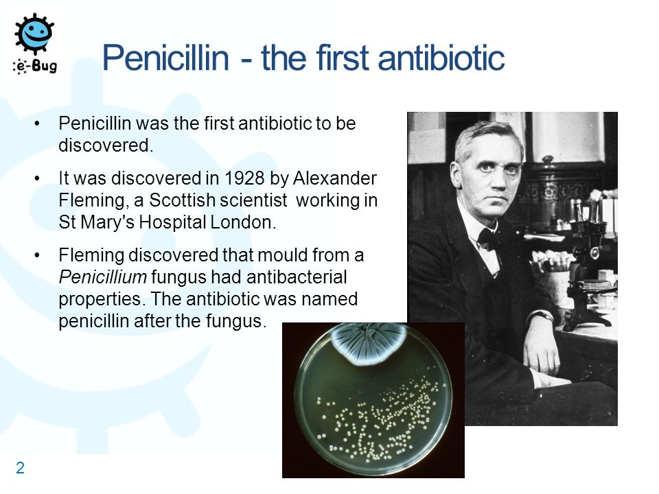 the discovery of penicillin The discovery of penicillin, one of the world's first antibiotics, marks a true turning point in human history -- when doctors finally had a tool that could completely cure their patients of.