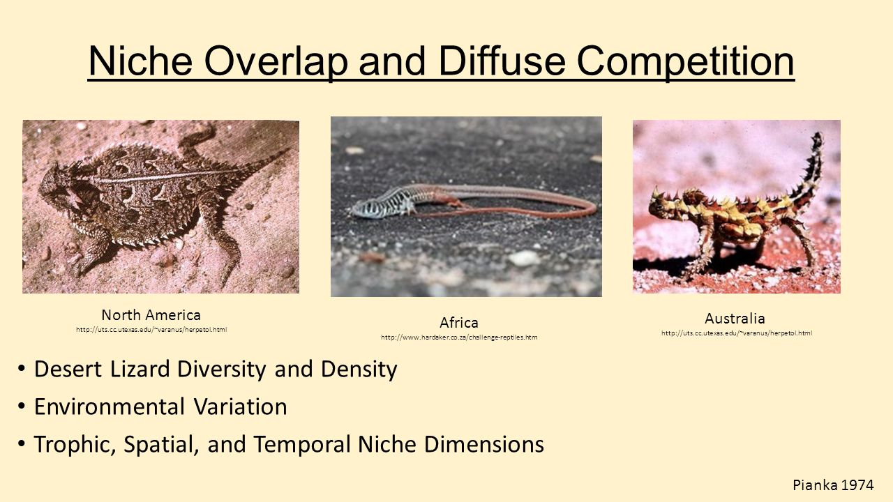 Niche Overlap and Diffuse Competition