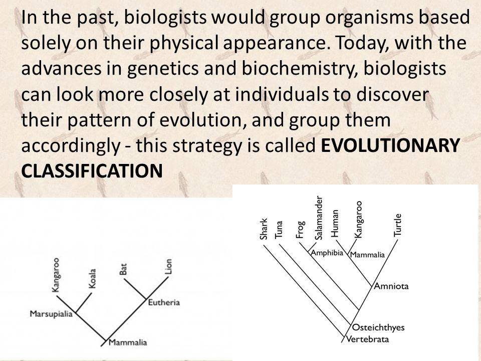 In the past, biologists would group organisms based solely on their physical appearance.