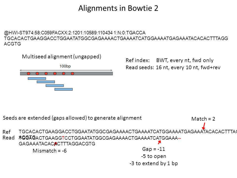 Alignments in Bowtie 2 Multiseed alignment (ungapped)