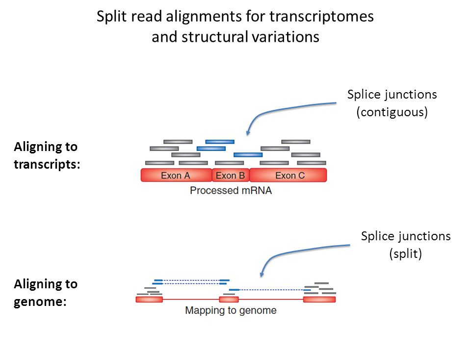 Split read alignments for transcriptomes and structural variations