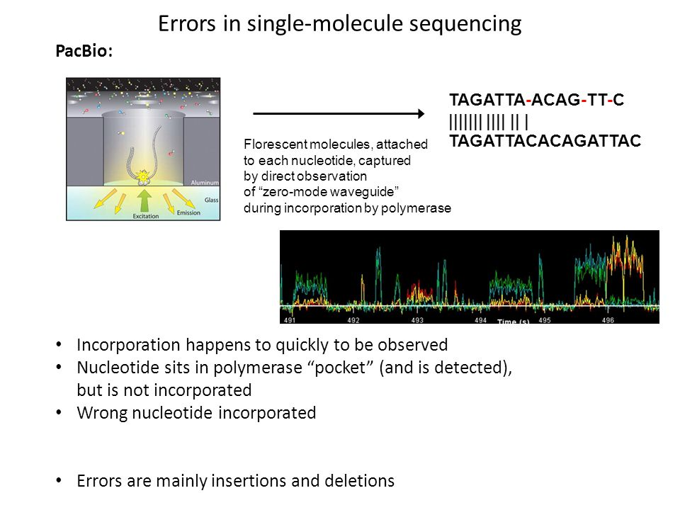 Errors in single-molecule sequencing