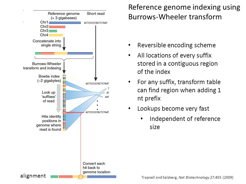 Reference genome indexing using Burrows-Wheeler transform