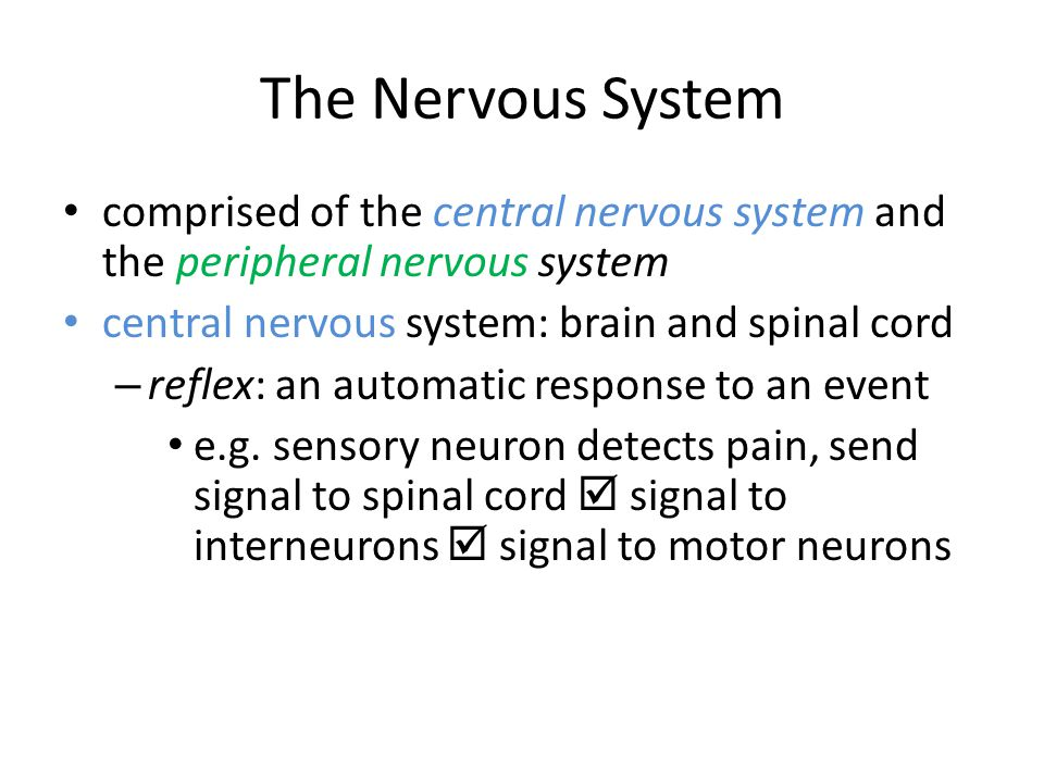 The Nervous System comprised of the central nervous system and the peripheral nervous system. central nervous system: brain and spinal cord.