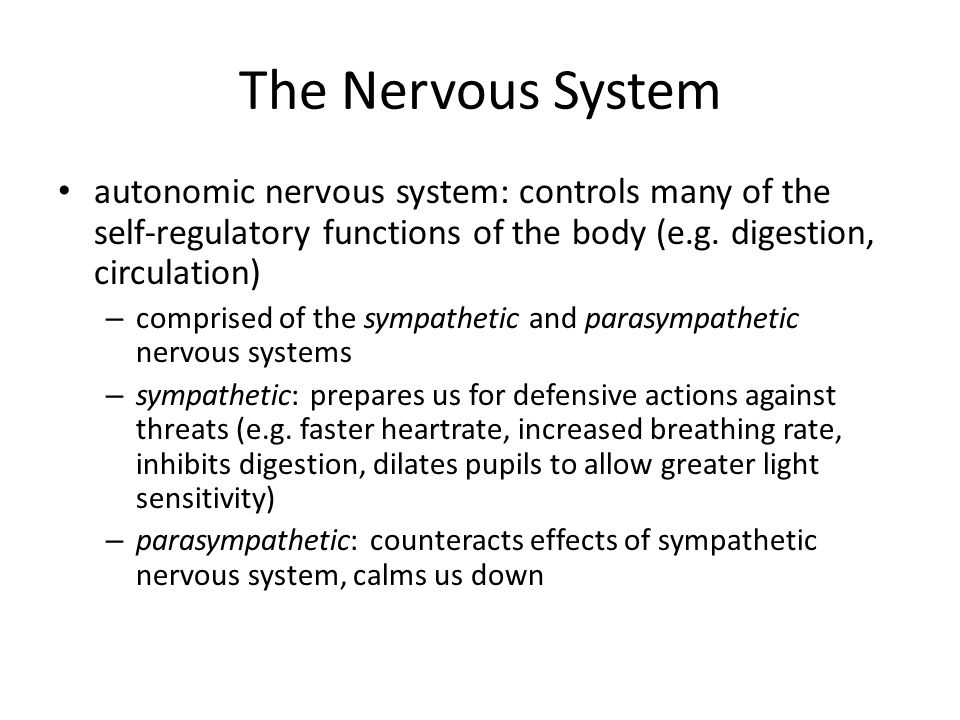 The Nervous System autonomic nervous system: controls many of the self-regulatory functions of the body (e.g. digestion, circulation)