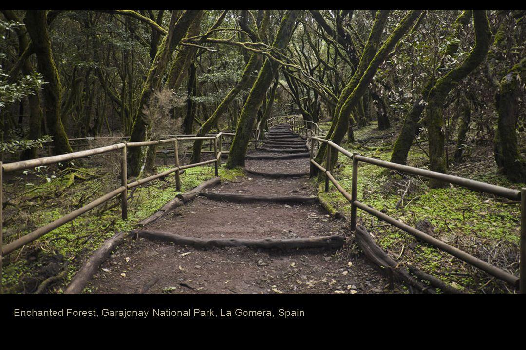 Enchanted Forest, Garajonay National Park, La Gomera, Spain