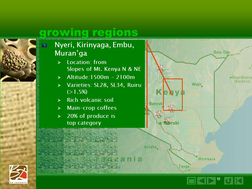 growing regions  Nyeri, Kirinyaga, Embu, Muran'ga