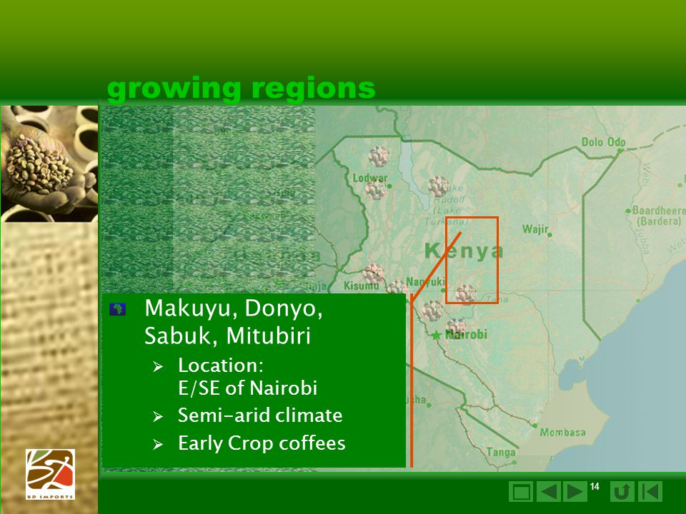 growing regions Makuyu, Donyo, Sabuk, Mitubiri 