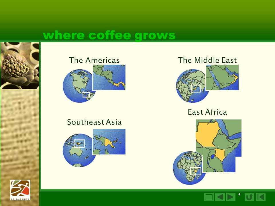 where coffee grows  The Americas The Middle East East Africa