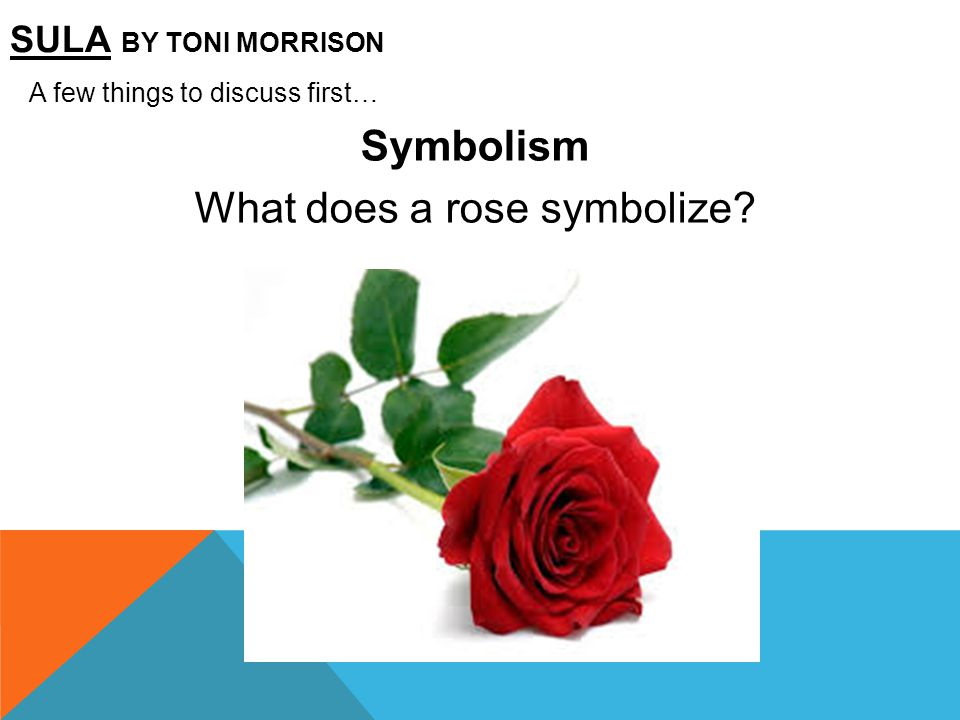What does a rose symbolize