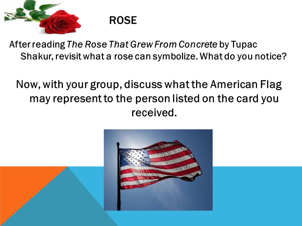 Rose After reading The Rose That Grew From Concrete by Tupac Shakur, revisit what a rose can symbolize. What do you notice