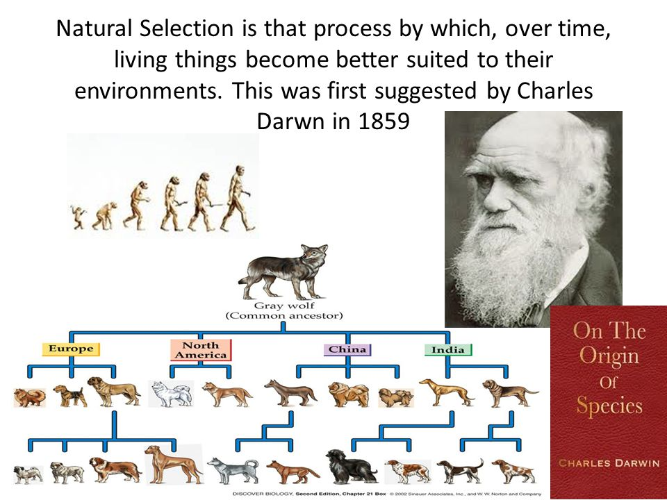 Natural Selection is that process by which, over time, living things become better suited to their environments.