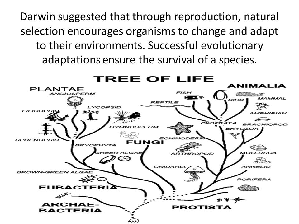 Darwin suggested that through reproduction, natural selection encourages organisms to change and adapt to their environments.