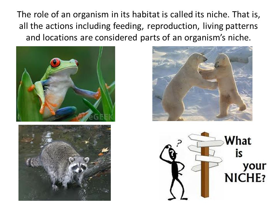 The role of an organism in its habitat is called its niche