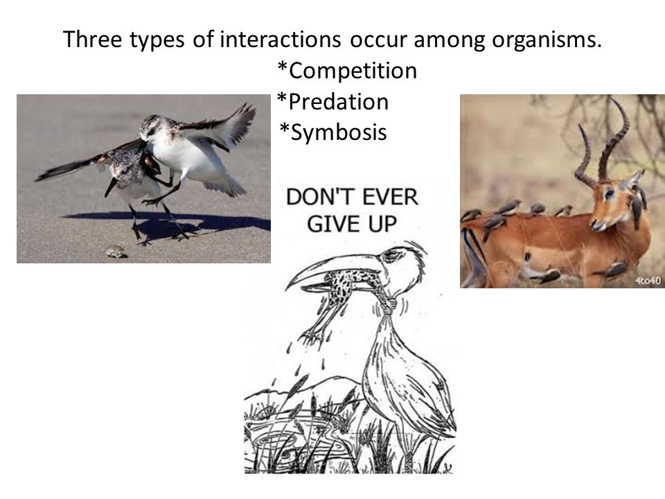 Three types of interactions occur among organisms. Competition