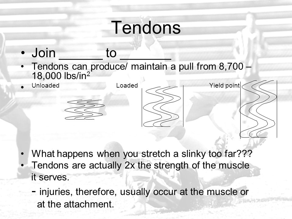 Tendons Join ______ to _______