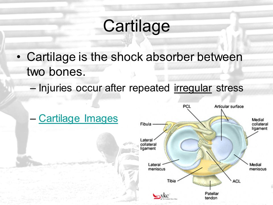 Cartilage Cartilage is the shock absorber between two bones.