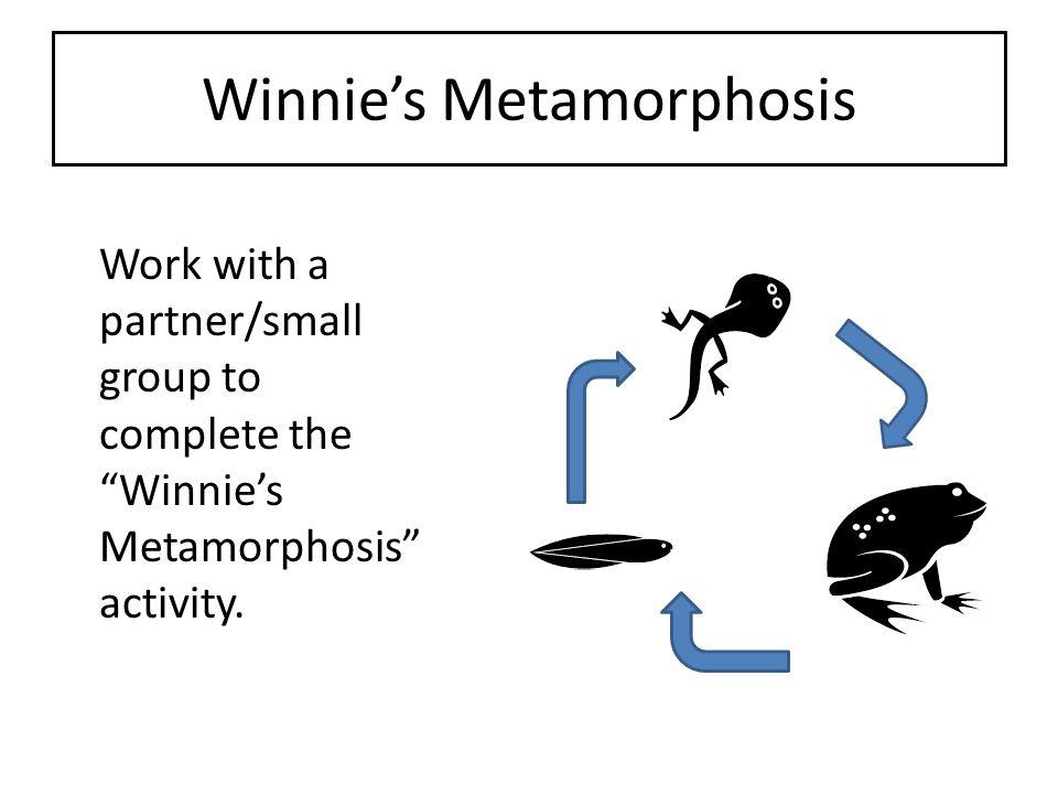 Winnie's Metamorphosis
