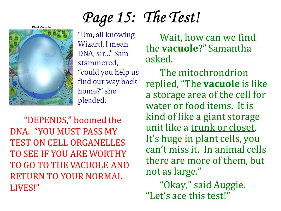Page 15: The Test! Um, all knowing Wizard, I mean DNA, sir… Sam stammered, could you help us find our way back home she pleaded.