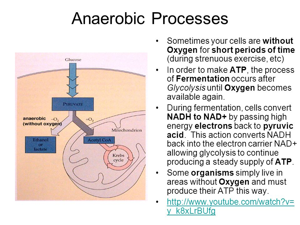 Anaerobic Processes Sometimes your cells are without Oxygen for short periods of time (during strenuous exercise, etc)