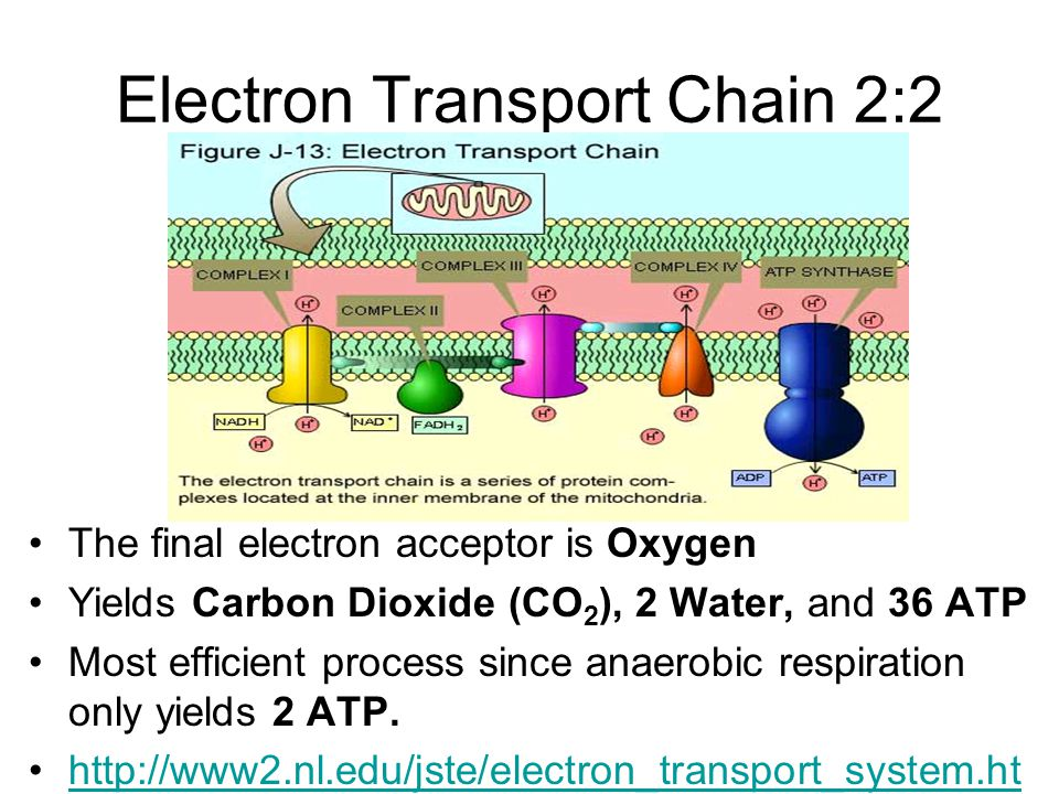Electron Transport Chain 2:2