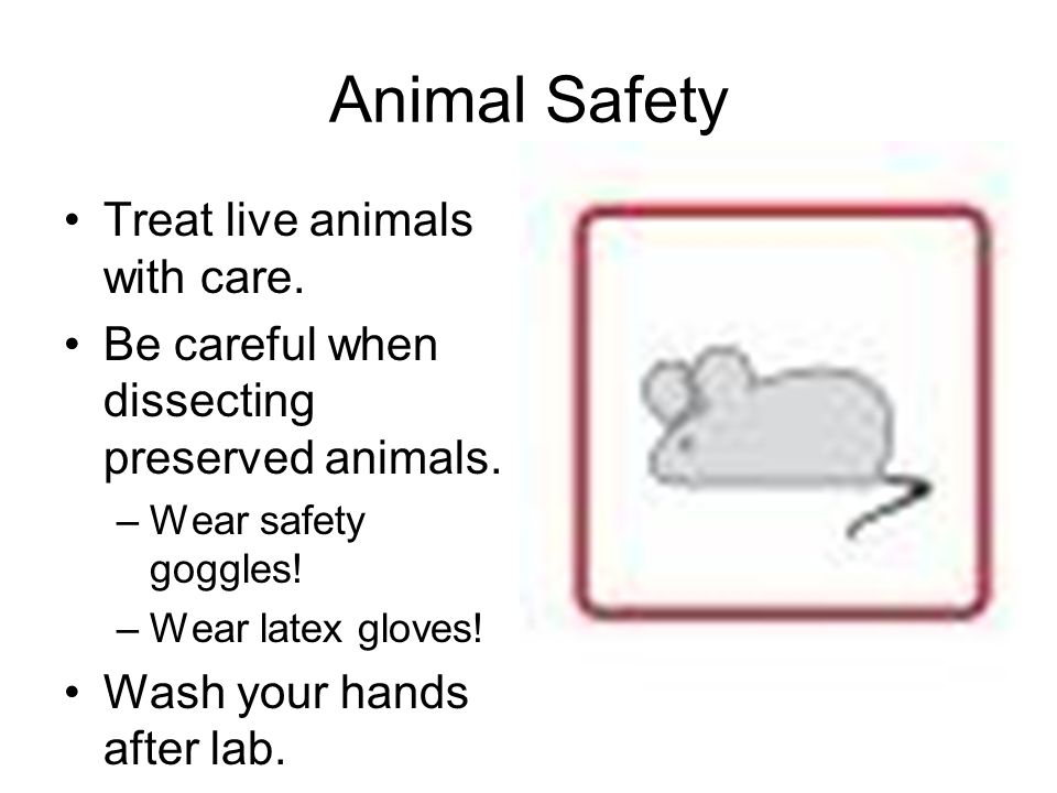 Animal Safety Treat live animals with care.