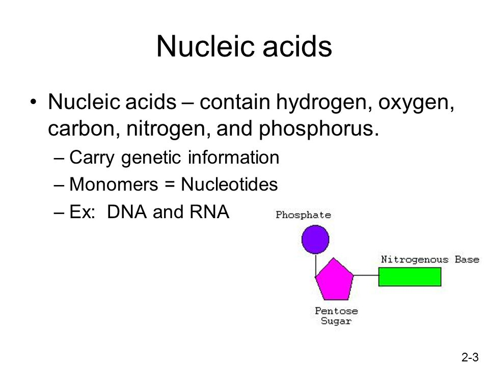 Nucleic acids Nucleic acids – contain hydrogen, oxygen, carbon, nitrogen, and phosphorus. Carry genetic information.