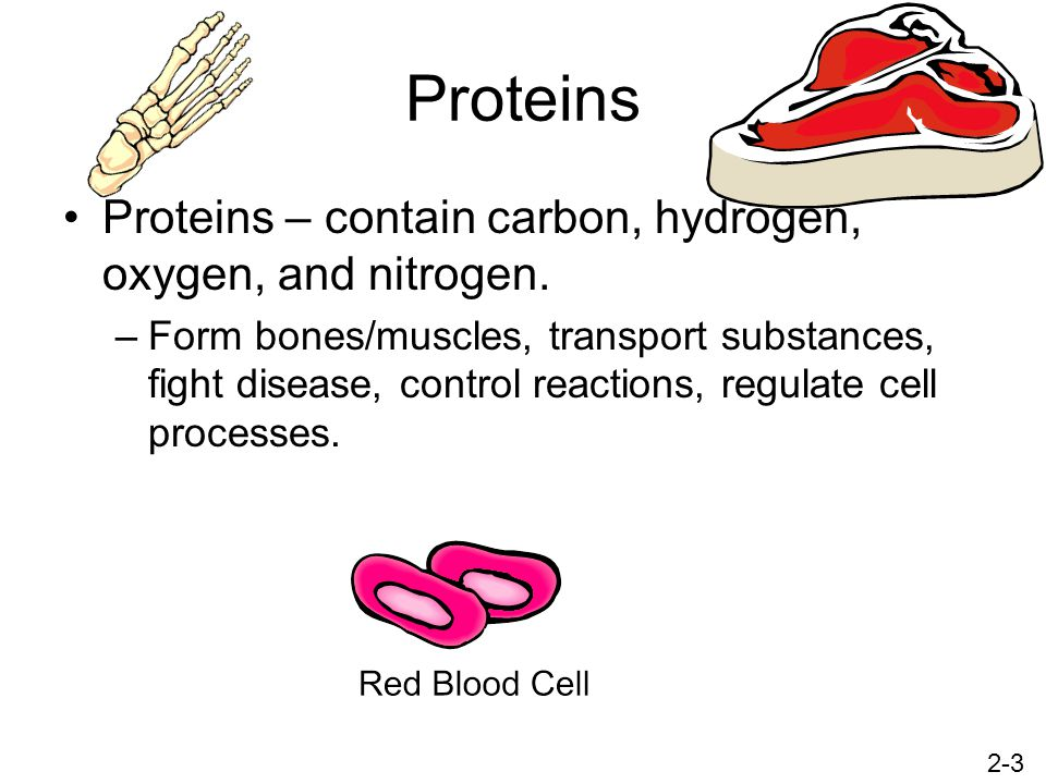 Proteins Proteins – contain carbon, hydrogen, oxygen, and nitrogen.