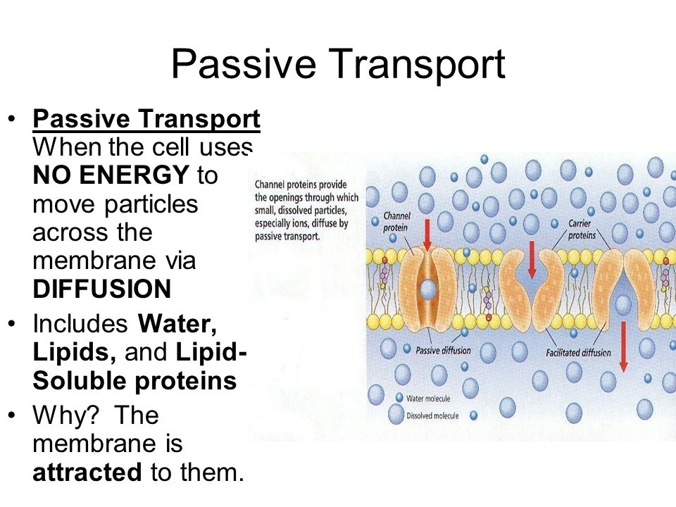 Passive Transport Passive Transport When the cell uses NO ENERGY to move particles across the membrane via DIFFUSION.