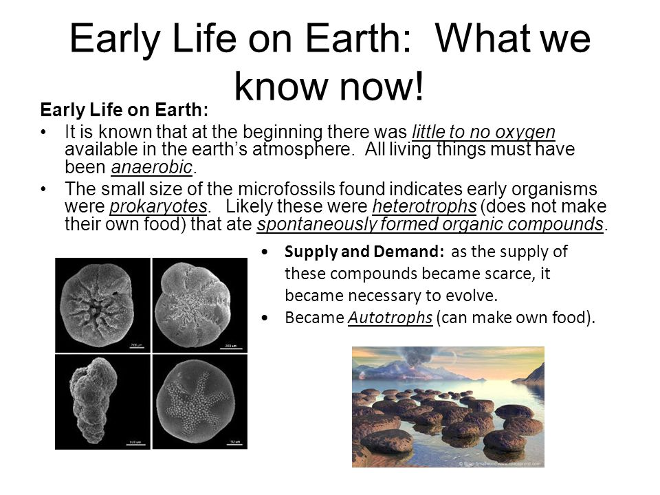 Early Life on Earth: What we know now!