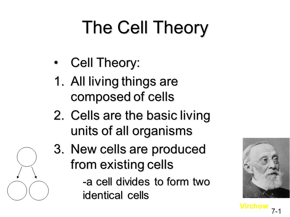 The Cell Theory Cell Theory: All living things are composed of cells