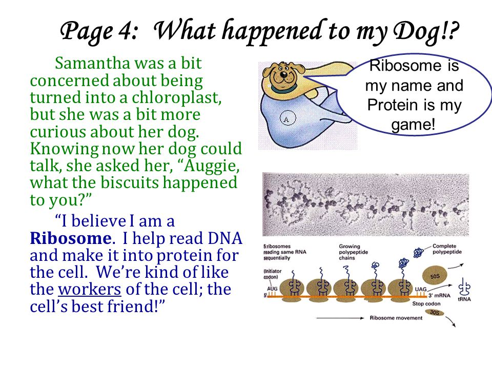 Page 4: What happened to my Dog!